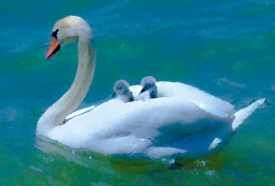 Muttertag Schnitzel-Flitzer